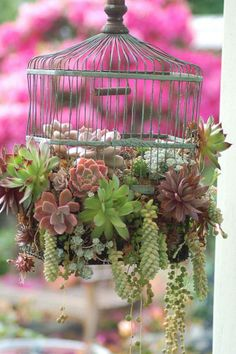 Bird cage with succulents
