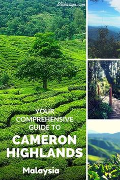 Your comprehensive Guide to the Cameron Highlands, Malaysia I Half-Day Tour I Things to do in Cameron Highlands I Mossy Forest & Tea Plantations I Nature I #Cameronhighlands #Malaysia