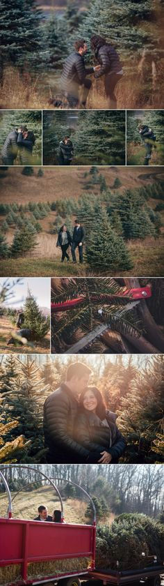 Cute marriage proposal idea at a Michigan tree farm! Just in time for the holidays as Luke surprised Karli before finding their first Christmas tree together. #proposal #treefarm