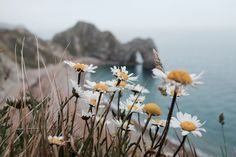 streetiphoneography:  Daisy Daisy….   The view of Durdle Door, Dorset.