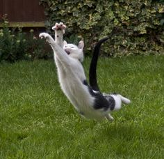 Belly-flop in Three, Two, One... - Art of the Cat Hunt