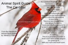 Cardinal granny said she will come back as one. I see them when im sad or feel alone. I loved her and her spirit is with me and mine.