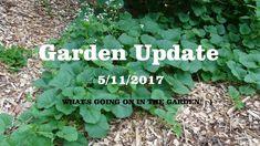 ⟹ GARDEN UPDATE, Garden is ready! Planting begun! 5/10/2017 #garden