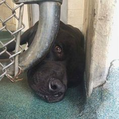 Elvis needs help to leave the building: Miami-Dade shelter pooch wants a home