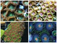 WHOLESALE MARINE CORAL FISH LISTS FOR IMPORT OF FRESH WATER MARINE AQUARIUMS TANKS CHEAP DISCOUNTED LISTS at Aquarist Classifieds
