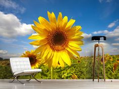 Foto #Tapete Das Feld der Sonnenblumen Felder, Photos, Self Adhesive Wallpaper, Sunflowers, Photo Wallpaper, Wall Papers