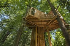Med petimi bukvami in smreko je v nedrju Mestnega gozda Celje 'zrasla' gozdna hiška na drevesu, svojevrsten arhitekturni in statični izziv, ki v gozd zvablja navdušence estetike in narave.