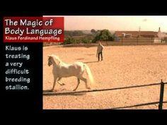 Hempfling - The Magic of Body Language - Klaus treats a difficult breeding stallion Horse Videos, Horse Training, Ferdinand, Body Language, Dressage, Magic, Treats, Horses, Liberty