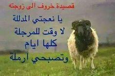 احلى كلامنا: قصيدة خروف الى زوجته