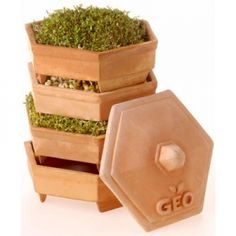Order the GEO Terracotta Sprouter Starter Kit with 3 Free packs of organic sprouting seeds from the Sprouter Specialists. Terracotta, Gutter Garden, Sprouting Seeds, Wheat Grass, Pottery Designs, How To Eat Paleo, Garden Planters, Balcony Garden, Medicinal Plants