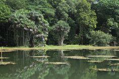Parque em plena Floresta Amazônica tem trilhas ciclismo e rapel