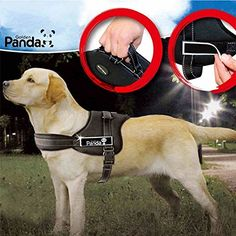 Dog Harness No Pull Dog Vest Harness with Handle Comfortable Reflective and Adjustable to Wear for Medium and Large Dogs (XL Black) Reviews