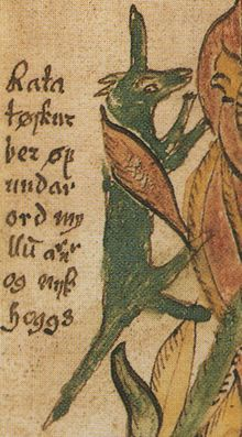 """In Norse mythology, Ratatoskr (Old Norse, generally considered to mean """"drill-tooth""""[1] or """"bore-tooth""""[2]) is a squirrel who runs up and down the world tree Yggdrasil to carry messages between the unnamed eagle, perched atop Yggdrasil, and the wyrm Níðhöggr, who dwells beneath one of the three roots of the tree. Ratatoskr is attested in the Poetic Edda, compiled in the 13th century from earlier traditional sources, and the Prose Edda, written in the 13th century by Snorri Sturluson."""