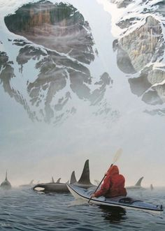 I wanna canoe with the Orcas. I wanna canoe with the Orcas. I wanna canoe with the Orcas. Someone please take me canoeing with the Orcas! Places To Travel, Places To See, Travel Destinations, Beautiful World, Beautiful Places, Amazing Places, All Nature, Nature Images, Amazing Nature