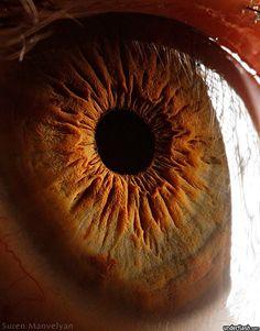 Blog de cursoiridologia : IRIDOLOGIA - CURSO DE IRIDOLOGIA A DISTÂNCIA, ESTUDO DA ÍRIS - 10
