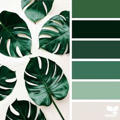 today's inspiration image for { botanical hues } is by @kylaferguson ... thank you, Kyla, for another inspiring #SeedsColor image share!