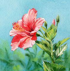 Hawaii artist flowers | ... Art International: TROPICAL HIBISCUS FLOWER watercolor painting by