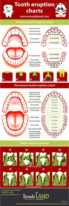 Here you can find both tooth charts, primary teeth eruption chart, permanent teeth eruption chart and the order of baby tooth appearance. #dental #toothcharts