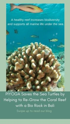 Save The Sea Turtles, Turtle Conservation, San Diego Beach, Kids Growing Up, Marine Biology, Ocean Creatures, Great Barrier Reef, Save The Planet, Tropical Fish