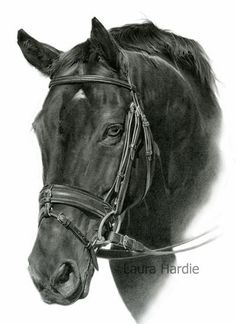 Horse by Laura Hardie. Pencil on Strathmore Bristol Smooth; almost went to noticeable on the reflected light but proportions are spot on and make that a mere slight weakness. Otherwise very photo real without an excess of highlighting. Realistic Pencil Drawings, Horse Drawings, Animal Drawings, Art Drawings, Horse Artwork, Equine Art, Pretty Horses, Heart Art, Art Tutorials