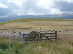 beautiful Ida Valley New Zealand Country, Roleplay Ideas, Central Otago, Kiwi, Trail, Old Things, Mountains, Places, People