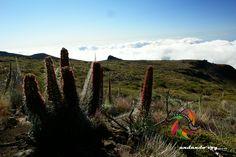 Altos de Ucanca #hiking #senderismo ##hike #outdoors #landscape #tenerife #paisajes