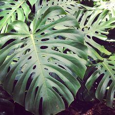 Wahiawa Botanical Garden in Wahiawā, HI - Free fun