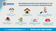 Emite Gobierno Municipal recomendaciones para cuidado de mascotas en temporada invernal   El Puntero