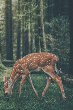 ~ dearest deer*