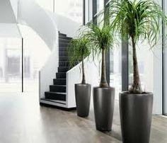 plantas para interiores 4.jpg (242×208)