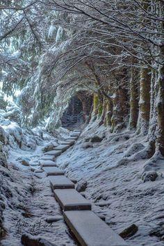 New Winter Landscape Photography Nature Ideas Winter Szenen, Winter Magic, Winter Photography, Landscape Photography, Nature Photography, Last Minute Travel, Snow Scenes, Winter Pictures, Winter Landscape