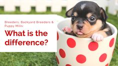 Breeders, Backyard Breeders and Puppy Mills: What is the Difference