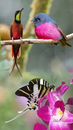 Flying Jewels, God`s Awesome & Gorgeous Creation. Creative Photos, Creative Art, Bird Pictures, Small Birds, Budgies, Photomontage, Bird Art, Bird Feathers, Beautiful Birds