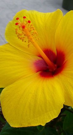 Love the hibiscus! These are everywhere here in Hawaii.