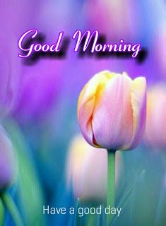 Good morning images with beautiful flowers Good Morning Images Flowers, Good Morning Beautiful Images, Good Morning Images Hd, Morning Pictures, Good Morning Cards, Good Morning Love, Good Morning Greetings, Good Morning Massage, Good Morning Coffee