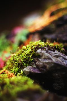 moss on stone | nature photography