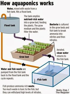by Dan & Robin Oosterhouse       In 2010 we saw a video promoting an aquaponics system that grows fish and vegetables called the Food Machi...