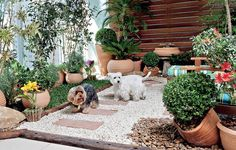 Mesmo morando em apartamento, os cães Billy e Burtikus podem brincar na grama – e também usá-la para fazer as necessidades