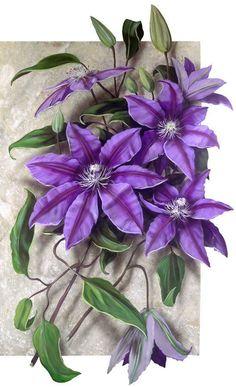 Purple Clamatis..
