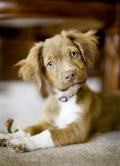 Wissenschaftler haben herausgefunden, warum wir den Hundeaugen nicht widerstehen können. Der Blickkontakt zwischen Mensch und Tier löst die Ausschüttung eines ganz bestimmten Hormons aus.