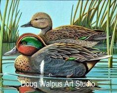 Acrylic Duck Print 11 x 14 Fine Art Green wing Teal Wildlife Art Birds Nature Animal by dougwalpusartstudio. Explore more products on http://dougwalpusartstudio.etsy.com