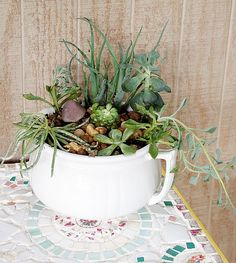 A Cultivated Nest:succulent garden in a vintage chamber pot