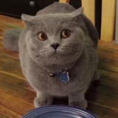 La réaction de ce chat coupable est la vidéo la plus drôle que vous verrez aujourd'hui!