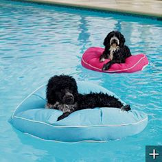 Pool float bed outdoor beanbag lounge water beds - 1000 Images About Pool Outdoors On Pinterest