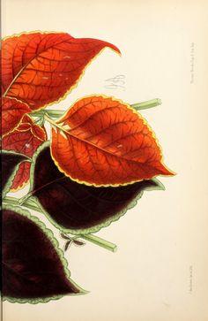 8, 1869 - La revista floral; - Biodiversity Heritage Library