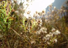 WILD NATURE PHOTOGRAPHY – TF