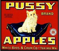 Retro Advertising, Retro Ads, Vintage Advertisements, Vintage Cat, Vintage Labels, Vintage Signs, Vintage Ephemera, Vintage Photos, Vintage Magazine