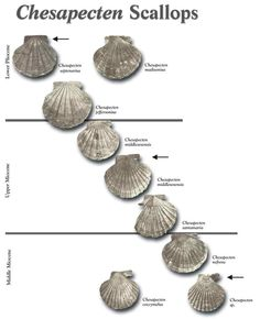 "The fossil record remains first and foremost among the databases that document changes in past life on Earth. Fossils provide the dimension of time to the study of life. Some of the most basic observations about fossils and the rock record were made long before Darwin formulated his theory of ""descent with modification."""