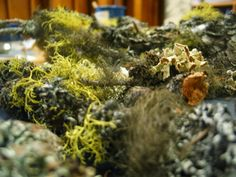 Learning in Place: Lichen observations and watercolor painting