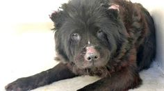 9/27 STILL THERE!!! VERY DEPRESSED!! Please share this neglected girl's photo and story.